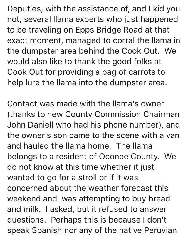 Text - Deputies, with the assistance of, and I kid you not, several llama experts who just happened to be traveling on Epps Bridge Road at that exact moment, managed to corral the llama in the dumpster area behind the Cook Out. We would also like to thank the good folks at Cook Out for providing a bag of carrots to help lure the llama into the dumpster area. Contact was made with the llama's owner (thanks to new County Commission Chairman John Daniell who had his phone number), and the owner's s