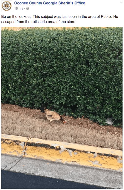 Tree - Oconee County Georgia Sheriff's Office 18 hrs Be on the lookout. This subject was last seen in the area of Publix. He escaped from the rotisserie area of the store