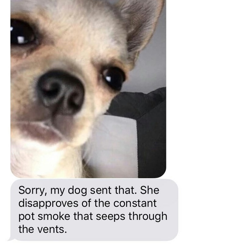 neighbor text message sending a selfie of a dog and complaining about the pot smell