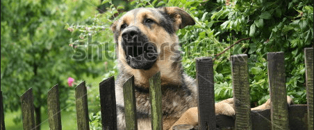 dog looking over a fence