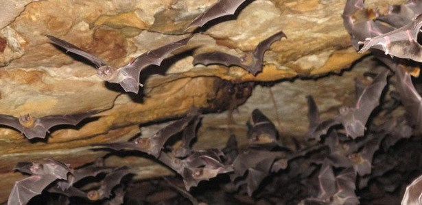 science fail vampire bats feed on human now