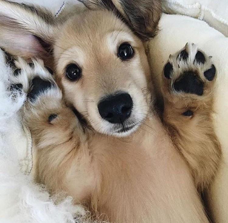 puppy,cute