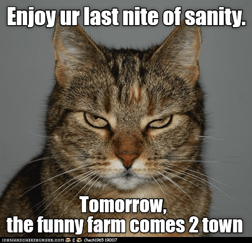 cat funny farm enjoy sanity night caption last tomorrow - 9003361024