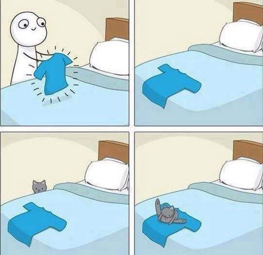 pets lol licking Cats web comics - 9003362560