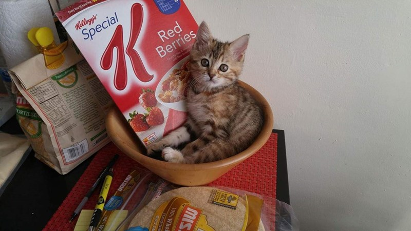 breakfast kitten if i fits i sits bowl Cats cereal - 9003363328