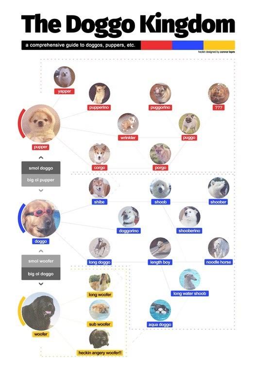 pupper doggo - 9003638528