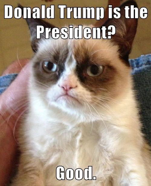 Grumpy Cat donald trump president good caption - 9003950848