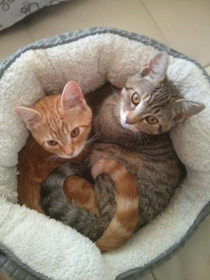 cute Cats image - 9004221184