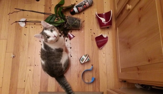 why cats are jerks: it's science