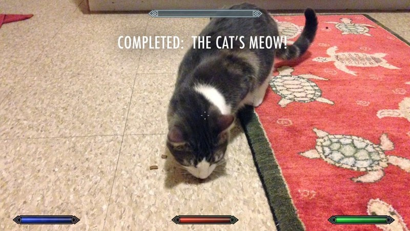 Cat - COMPLETED: THE CAT'S MEOW