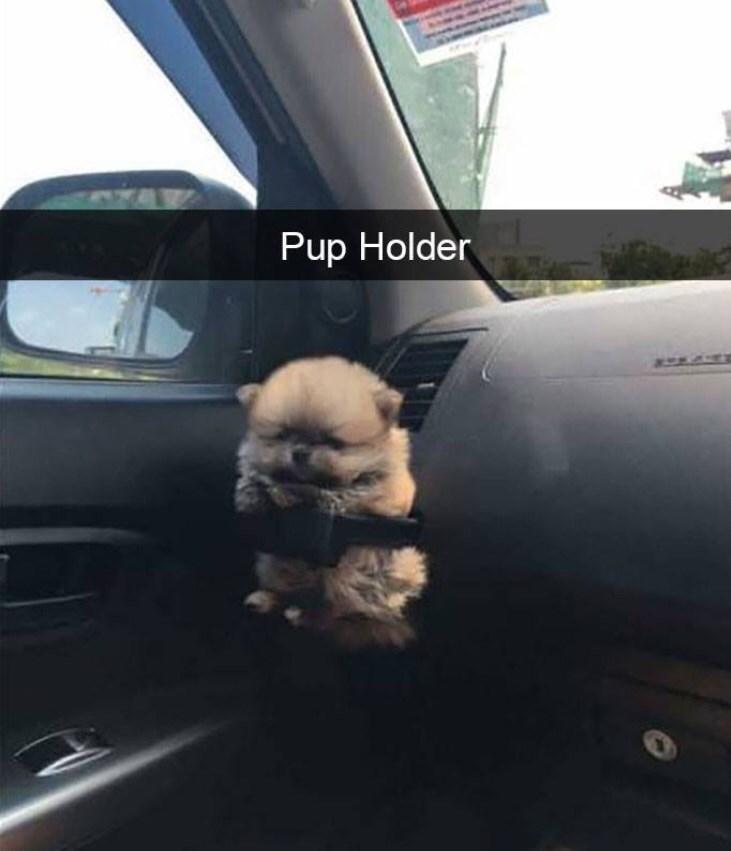 pupper - 9004581888