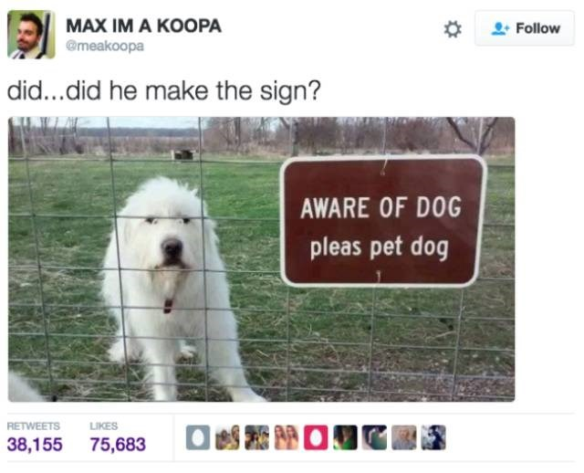 Dog - МАX IM A КOOРА @meakoopa Follow did...did he make the sign? AWARE OF DOG pleas pet dog LIKES RETWEETS 38,155 75,683