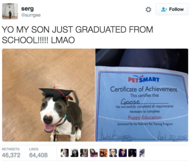 Dog breed - serg @surrgee Follow YO MY SON JUST GRADUATED FROM SCHOOL!!!!! LMAO PETSMART Certificate of Achievement This certifies that Goose has successfully completed all requirements necessary to complete Puppy Education Sponsored By the Piecdat Pet Training Program anal 20.206 RETWEETS LIKES 46,372 64,408
