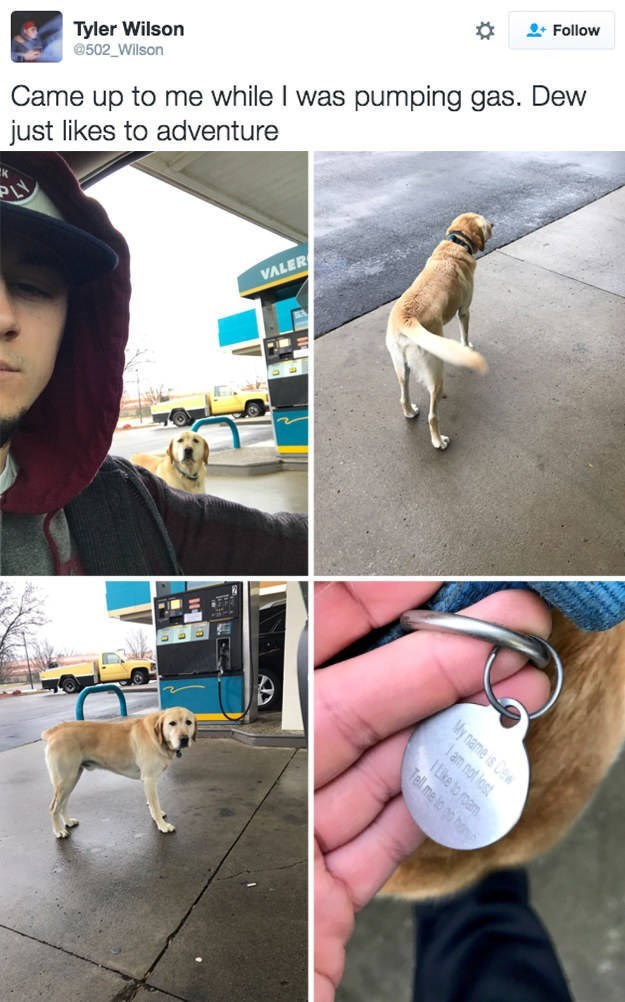 Dog breed - Follow Tyler Wilson 502_Wilson Came up to me while I was pumping gas. Dew just likes to adventure VALER lam not lost My name is TLike to roam Tell me lo go h