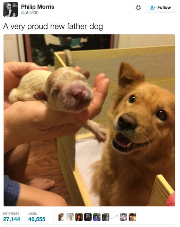 Dog breed - Philip Morris @phil500 Follow A very proud new father dog RETWEETS LIKES 27,144 46,555