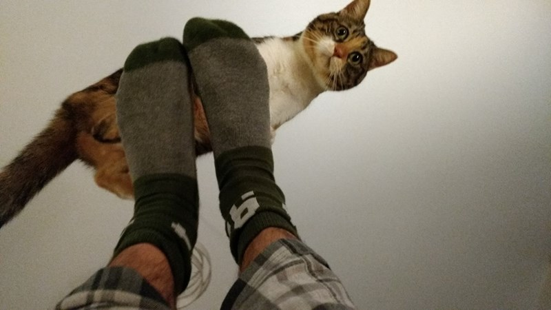 feet,Cats,yoga