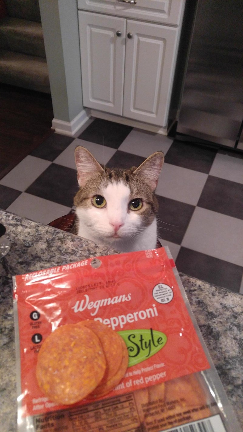 pepperoni begging Cats - 9005013504