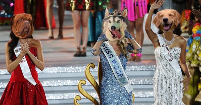 Dog - INDONESIA 尼 MISS WOOF