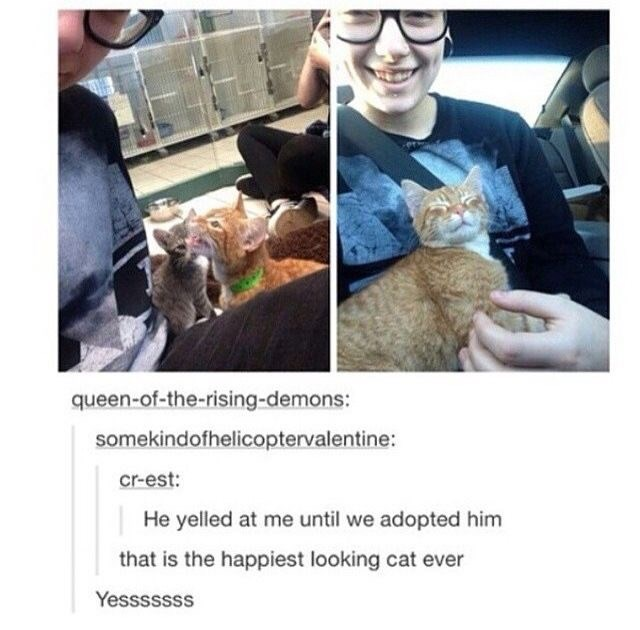 Snapshot - queen-of-the-rising-demons: somekindofhelicoptervalentine: cr-est: He yelled at me until we adopted him that is the happiest looking cat ever Yesssssss