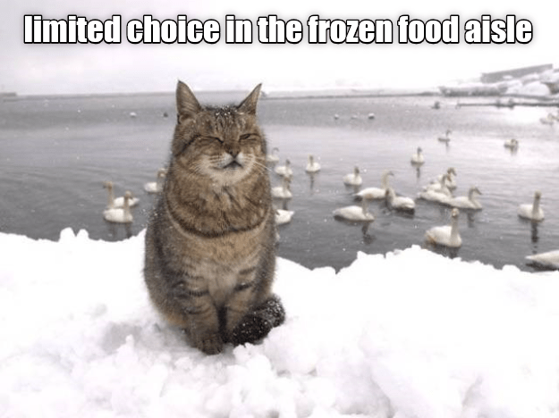 choice,cat,aisle,caption,frozen food,limited