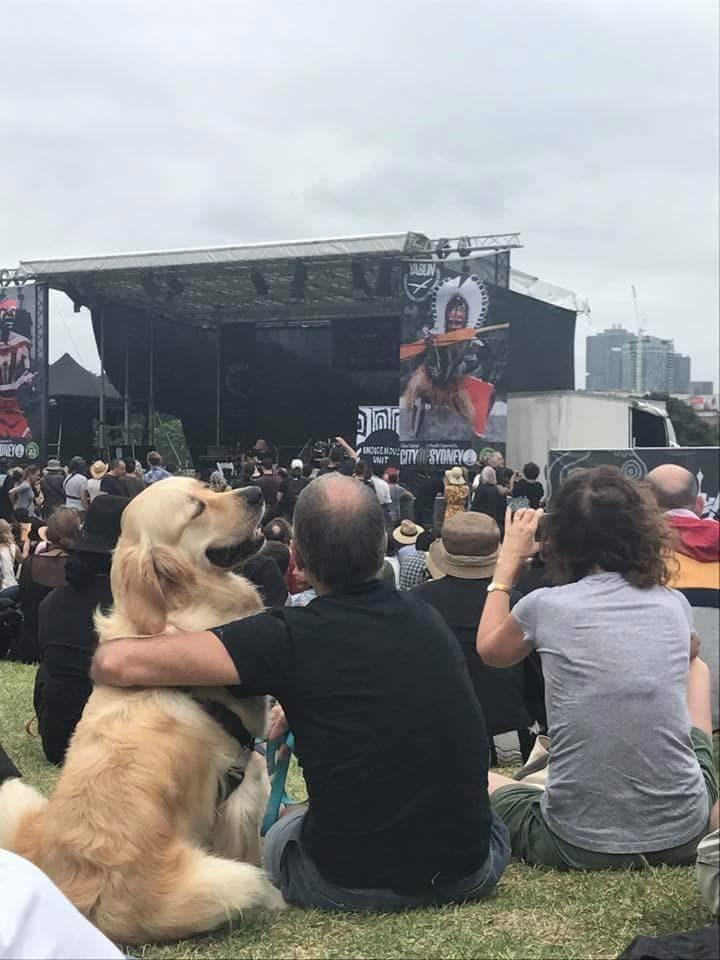 dogs barking concert nickelback - 9005286144