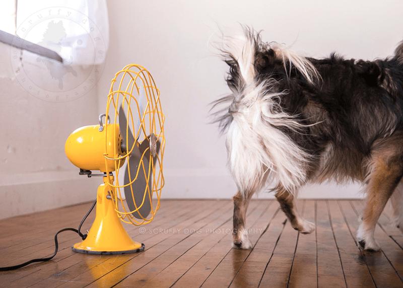 Dog - OSCRUFFY DOG PHOTOGRAPHY