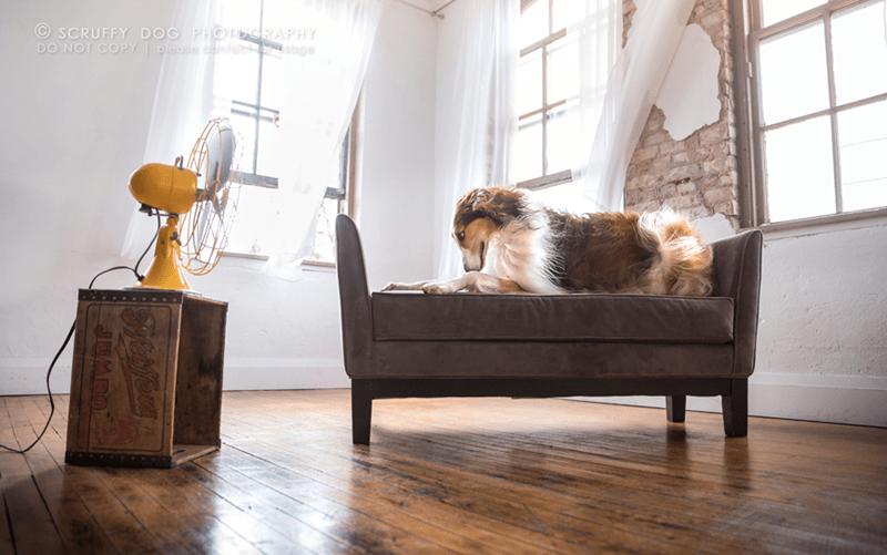 Floor - SCRUFFY DOG PHOToRAPHY DO NOT COPY please dent soge JUMBO