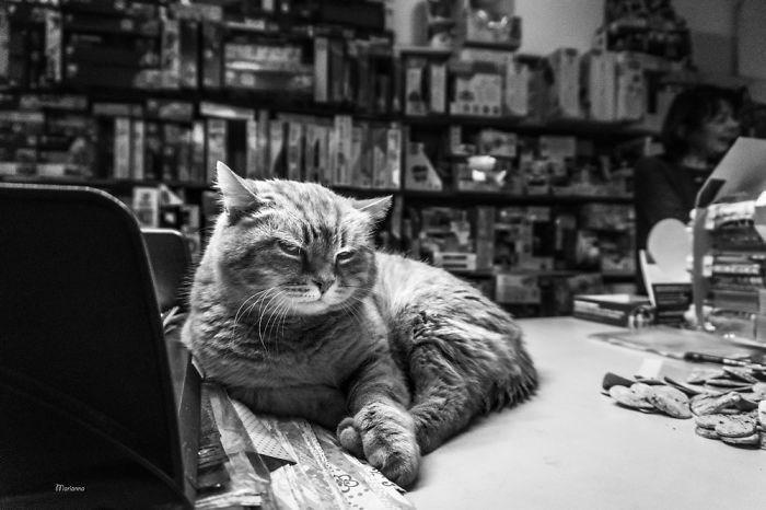 Cat - marianna