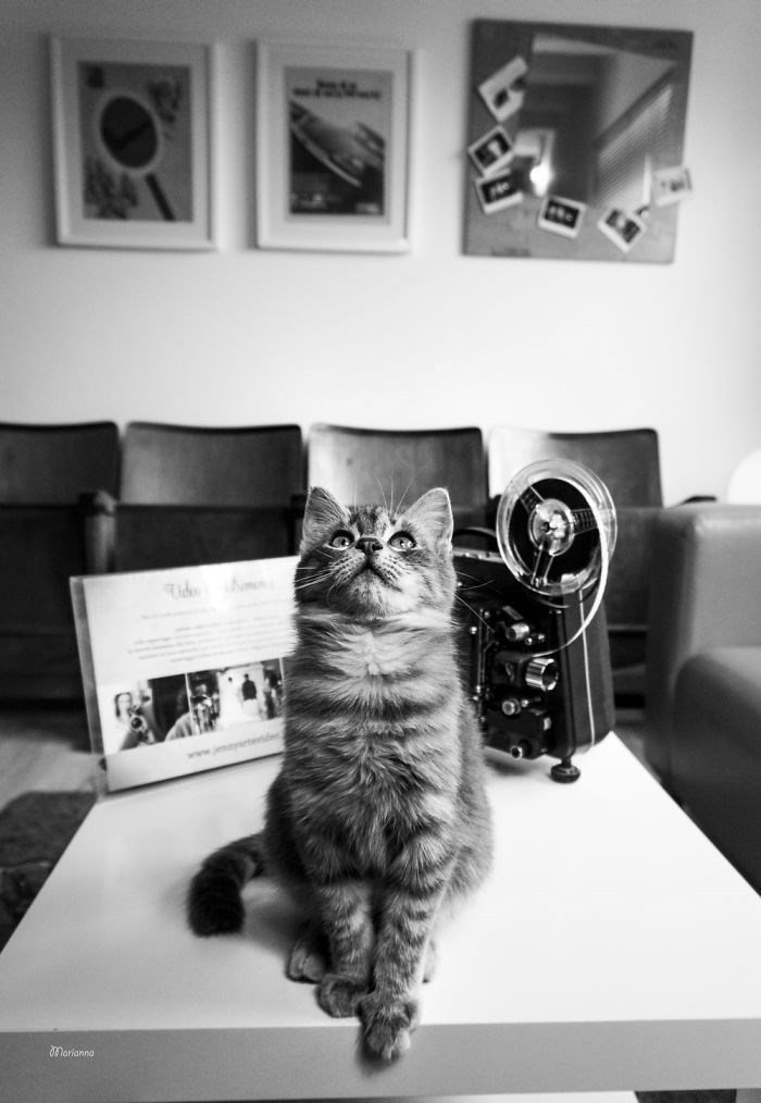 Cat - maetder Morianna