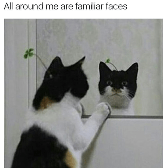 all around me cat meme