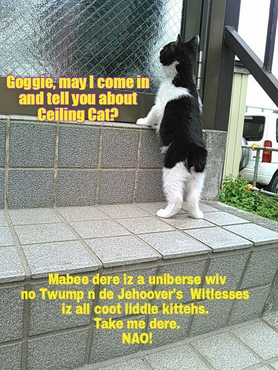cat,witlesses,goggie,ceiling cat,jehoover's,caption,tell