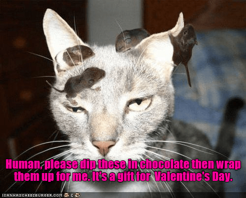 cat,dip,wrap,gift,chocolate,caption,Valentines day
