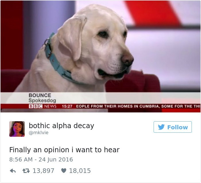 Dog - BOUNCE Spokesdog BBC NEWS 15:27 EOPLE FROM THEIR HOMES IN CUMBRIA, SOME FOR THE TH bothic alpha decay Follow @mklvie Finally an opinion i want to hear 8:56 AM 24 Jun 2016 13,897 18,015