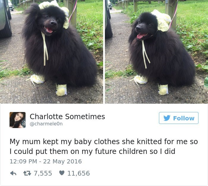 Dog - Charlotte Sometimes Follow @charmele0n My mum kept my baby clothes she knitted for me so I could put them on my future children so I did 12:09 PM 22 May 2016 7,555 11,656