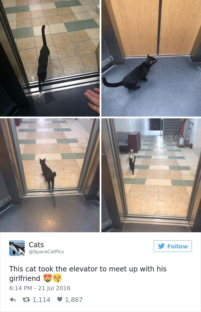 Floor - Cats @Space Follow tPics This cat took the elevator to meet up with his girlfriend 6:14 PM 21 Jul 2016 1,867 t 1,114