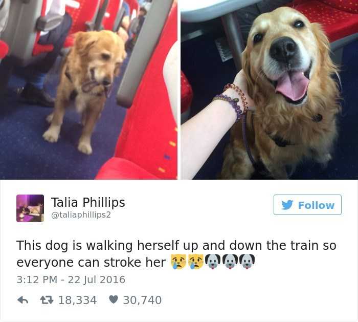 Dog - Talia Phillips Follow @taliaphillips2 This dog is walking herself up and down the train so everyone can stroke her A 3:12 PM 22 Jul 2016 18,334 30,740