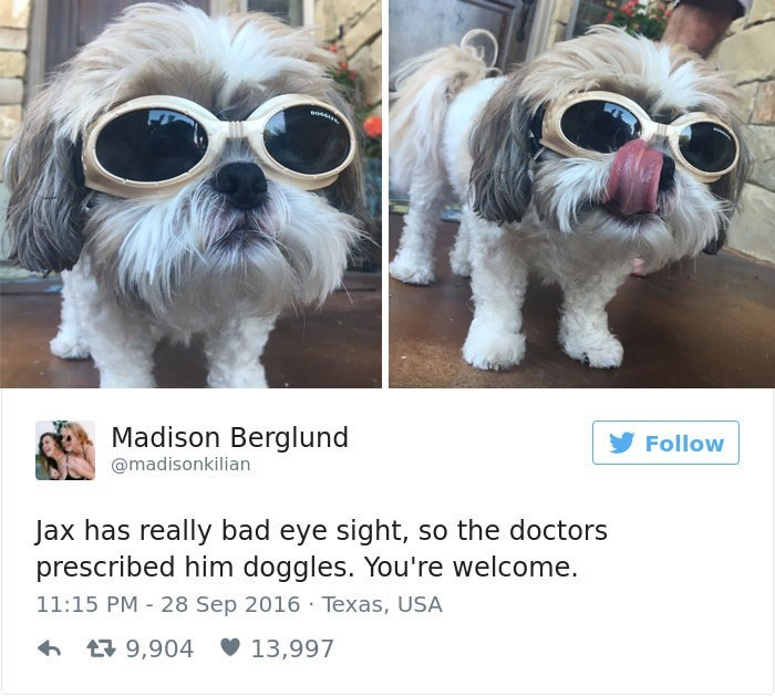 Dog - Madison Berglund Follow @madisonkilian Jax has really bad eye sight, so the doctors prescribed him doggles. You're welcome. 11:15 PM 28 Sep 2016 Texas, USA 9,904 13,997