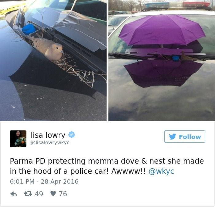Umbrella - UL lisa lowry Follow @lisalowrywkyc Parma PD protecting momma dove & nest she made in the hood of a police car! Awwww!! @wkyc 6:01 PM - 28 Apr 2016 t49 76
