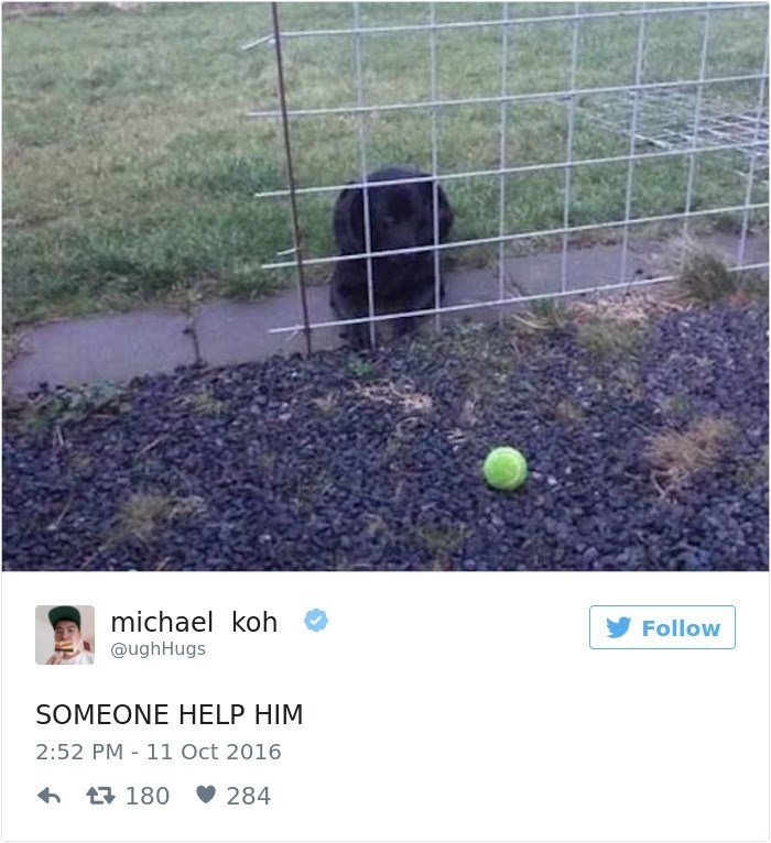 Net - michael koh Follow @ughHugs SOMEONE HELP HIM 2:52 PM 11 Oct 2016 180 284