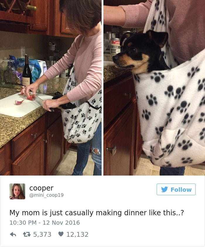 Canidae - Part INE cooper @mini_coop19 Follow My mom is just casually making dinner like this..? 10:30 PM 12 Nov 2016 5,373 12,132