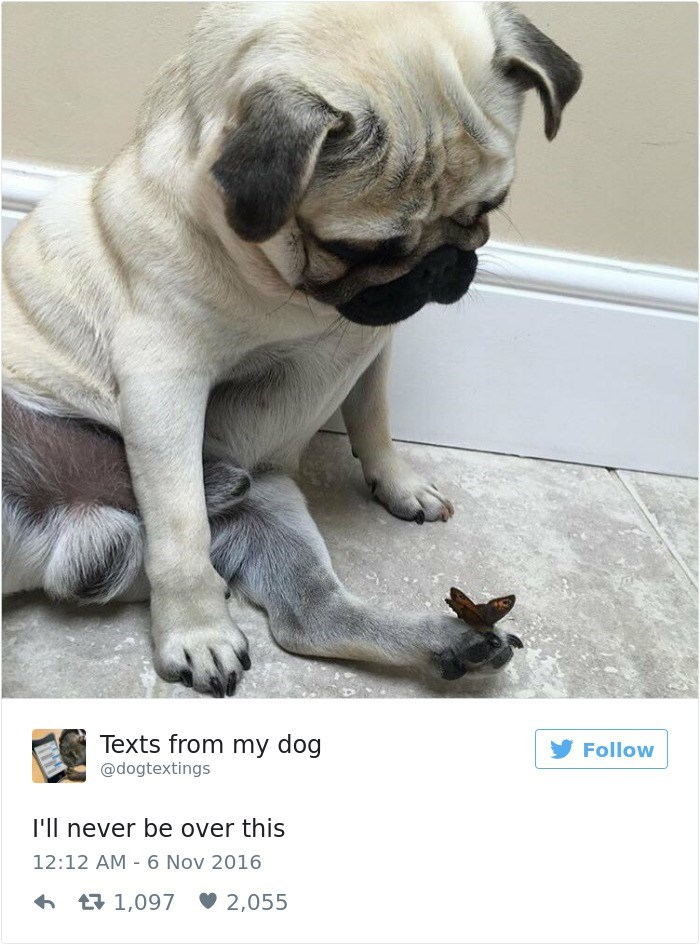 Pug - Texts from my dog Follow @dogtextings I'll never be over this 12:12 AM 6 Nov 2016 1,097 2,055