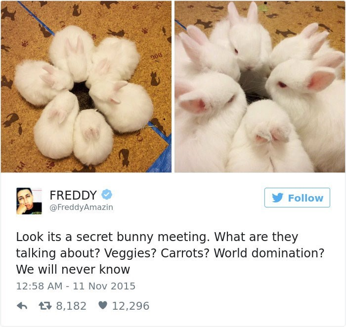 Nose - FREDDY Follow @FreddyAmazin Look its a secret bunny meeting. What are they talking about? Veggies? Carrots? World domination? We will never know 12:58 AM 11 Nov 2015 8,182 12,296