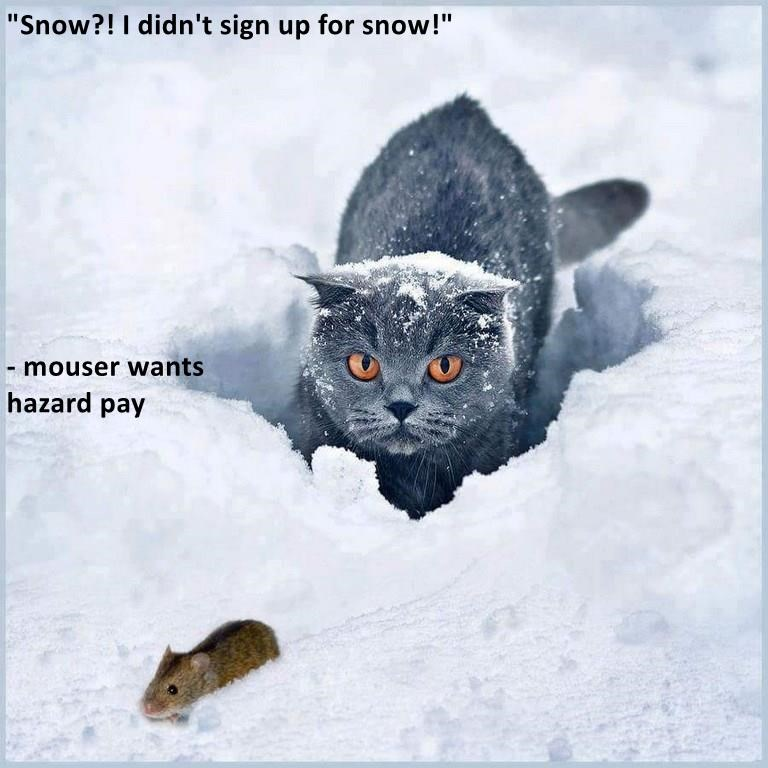 cat sign snow mouser didnt caption hazard pay - 9005836800