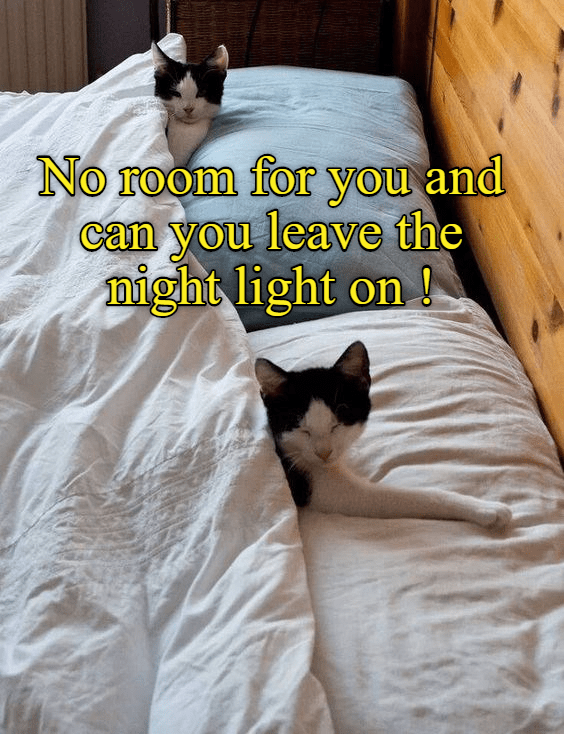 on,no room,night light,leave,caption,Cats