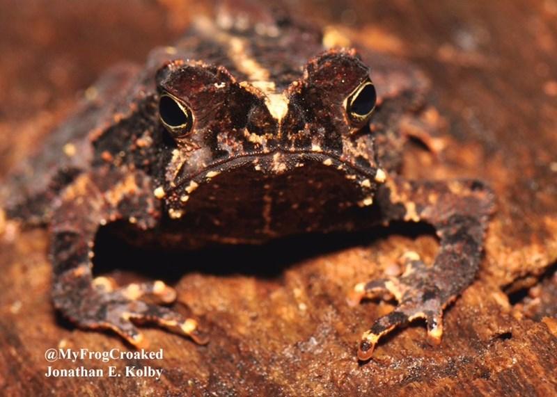 Toad - @MyFrogCroaked Jonathan E. Kolby