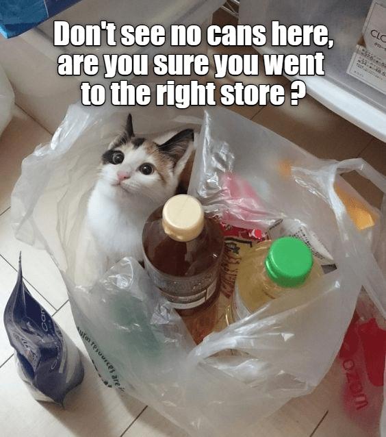Just Checking Lolcats Lol Cat Memes Funny Cats Funny Cat Pictures With Words On Them Funny Pictures Lol Cat Memes Lol Cats