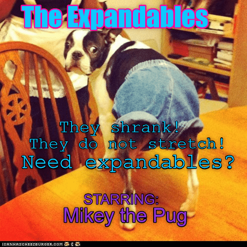 Funny picture of a pug dog dressed in expandable shorts with some captions around it.