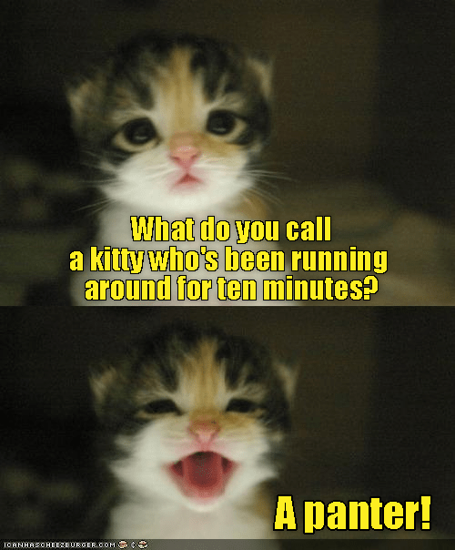panter call what running kitty caption