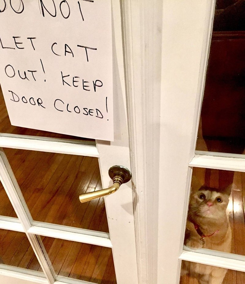 Sad sign closed Cats - 9005976576