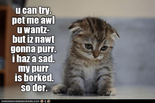 purr borked kitten pet me caption - 9006163712
